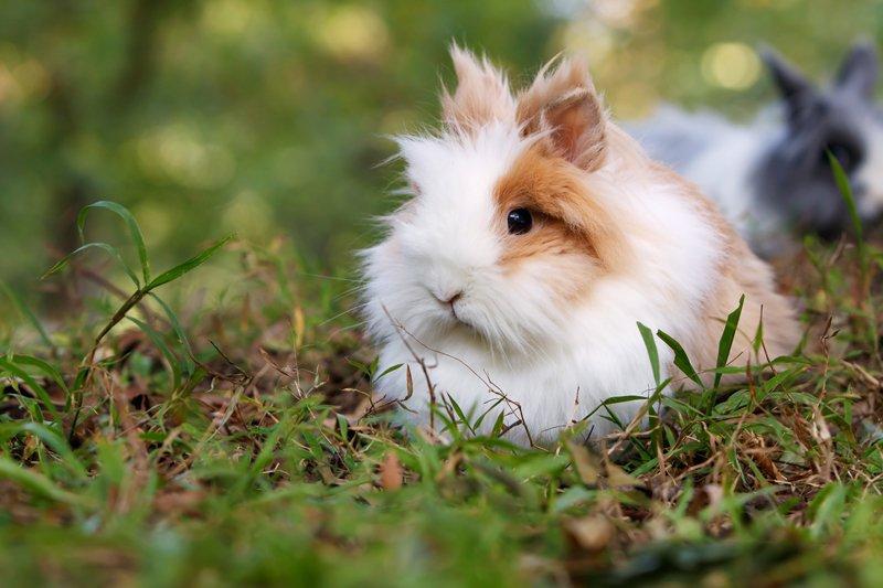 Alimentazione coniglio nano: gli alimenti migliori