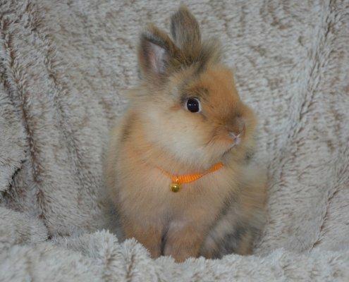 Scopriamo la vita del coniglio in natura