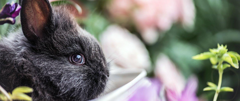 Vendita conigli nani da compagnia
