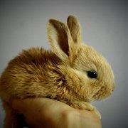 Prezzo coniglio nano: quanto costa un cucciolo?
